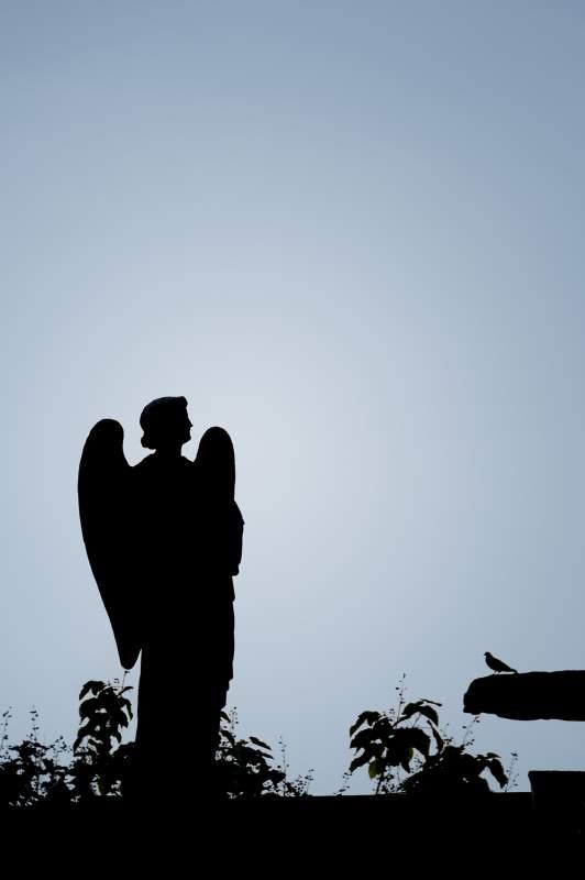 L'ange et le moineau